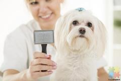 Experienced Dog Groomer / Grooming