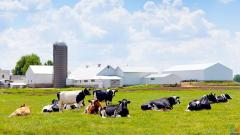We are looking for a job opportunity on a dairy farm
