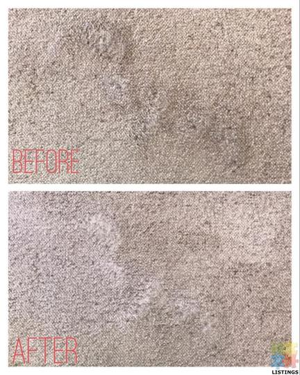 Professional Carpet cleaning (whole Auckland) - 4/4