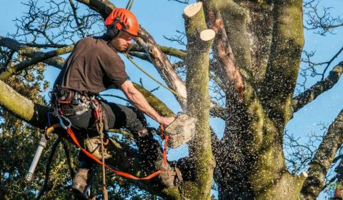 Trees remover cheapest in Auckland