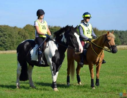 Horse Riding Coach for Secondary School