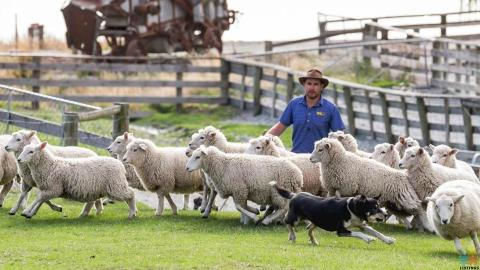 FARM MANAGER - High Country Sheep and Beef