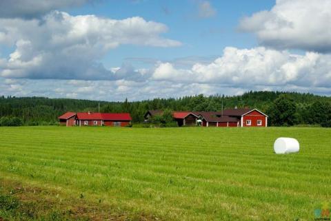 looking for seasonal dairy farm work