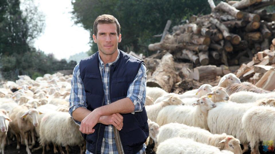 Shepherd - 1/1