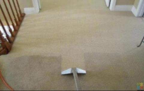 Carpet and sofa steam cleaning