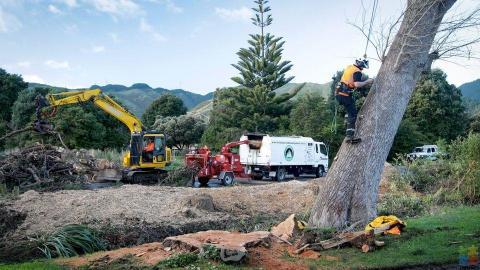 Arborist Apprentice