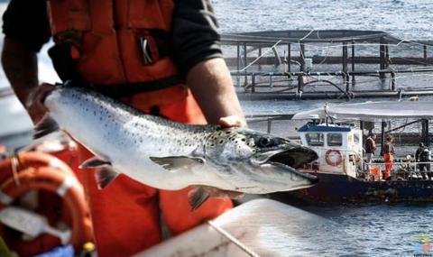 Salmon Farm Technician