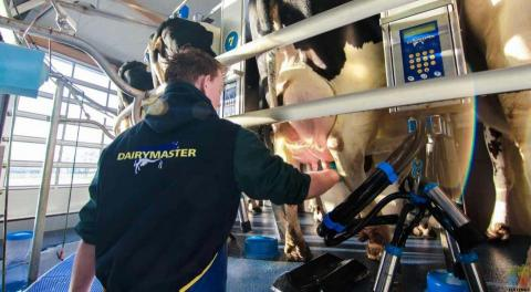RELIEF/CASUAL MILKER WANTED
