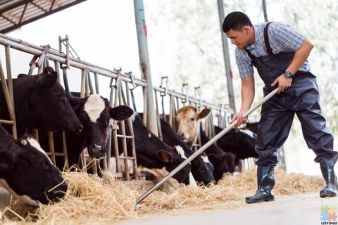 ESSENTIAL DAIRY WORKERS - POKENO