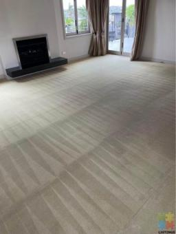 Carpet Steam and Shampoo cleaning