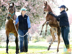 Foaling Nightwatch staff required